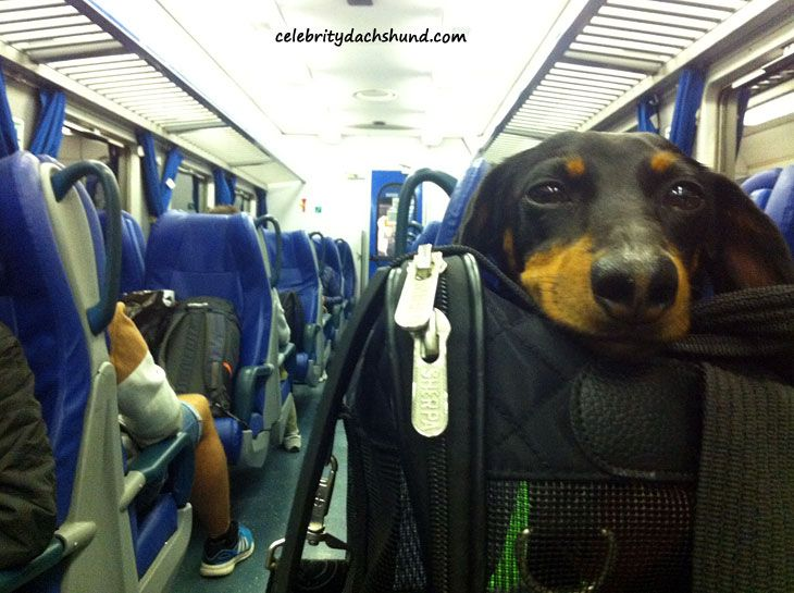 Crusoe Dog on a Train in Italy - Europe Trip Part 2