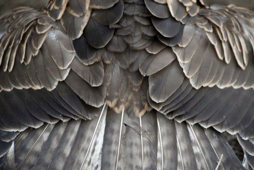 feathers// does this not amaze you?