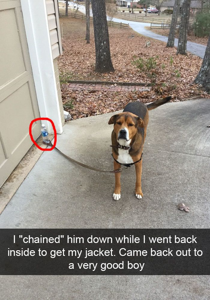 Funny Animal Snapchats That Deserve A Prize For Comedy Http - The 30 funniest animal snapchats of all time