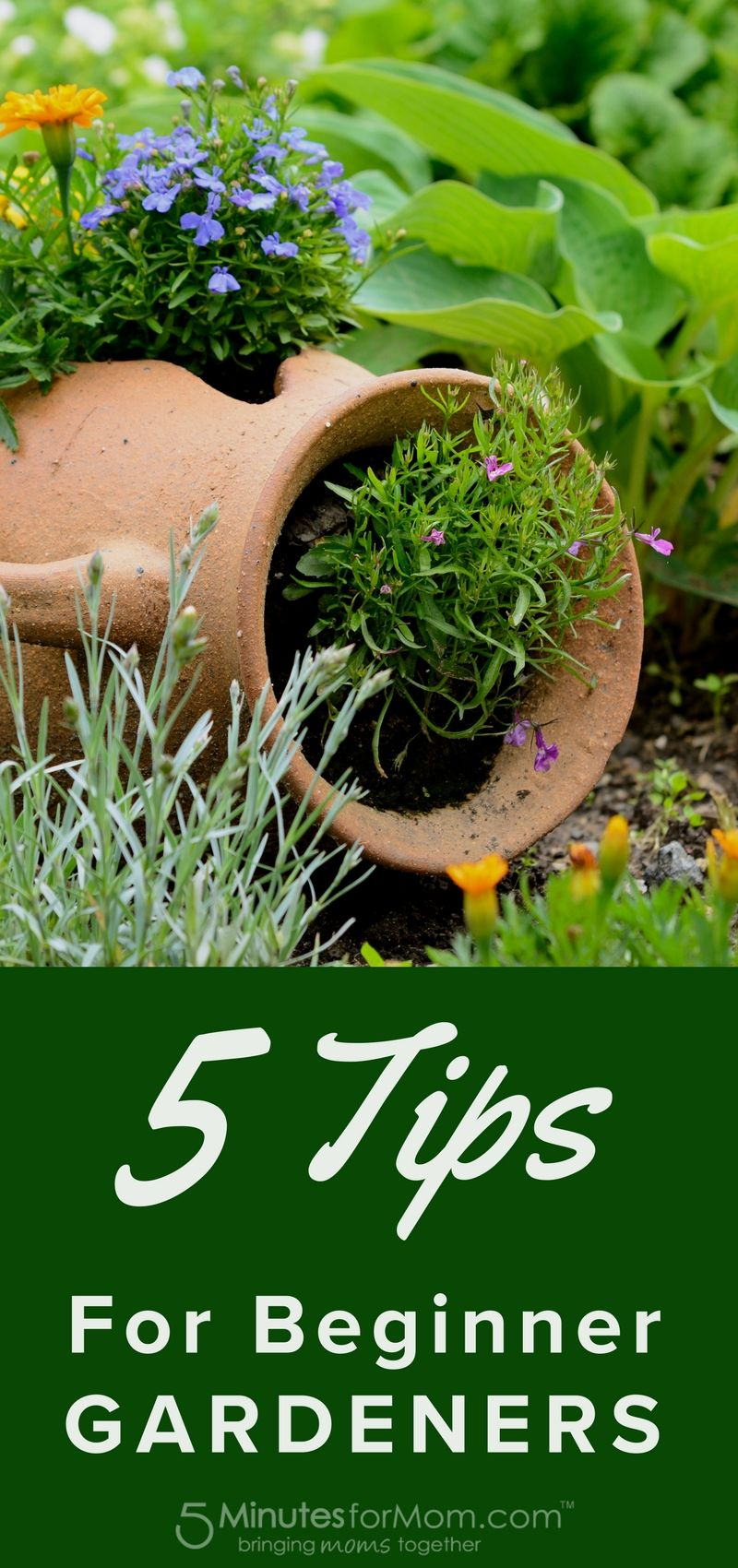 Gardening Hacks · 5 Tips For Beginner Gardeners