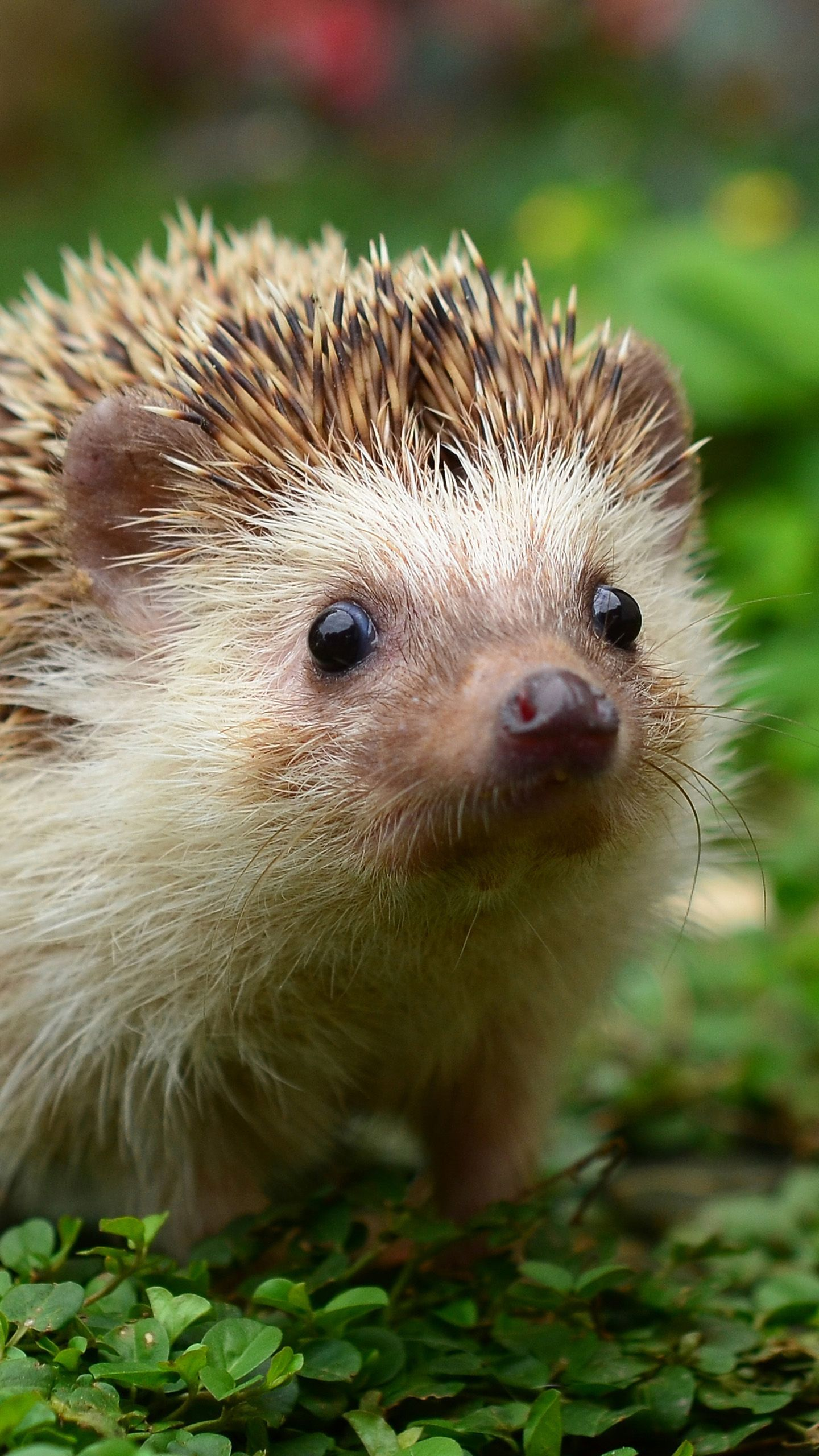 40 Hedgehog Wallpapers Download At Wallpaperbro Cute Animals Animal Pictures Baby Animals Pictures