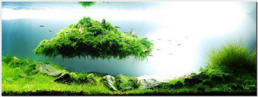 The Basics Of A Planted Aquarium Planted Aquarium Aquascape
