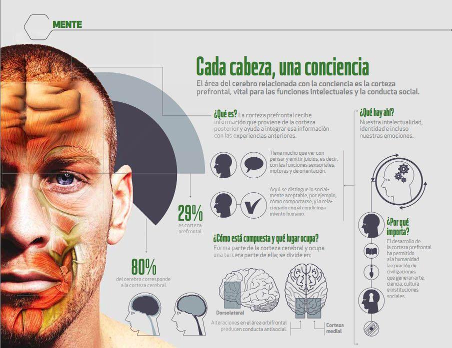 El área del #Cerebro relacionada con la #Conciencia es la corteza prefrontal, vital para las funciones intelectuales y la conducta social.