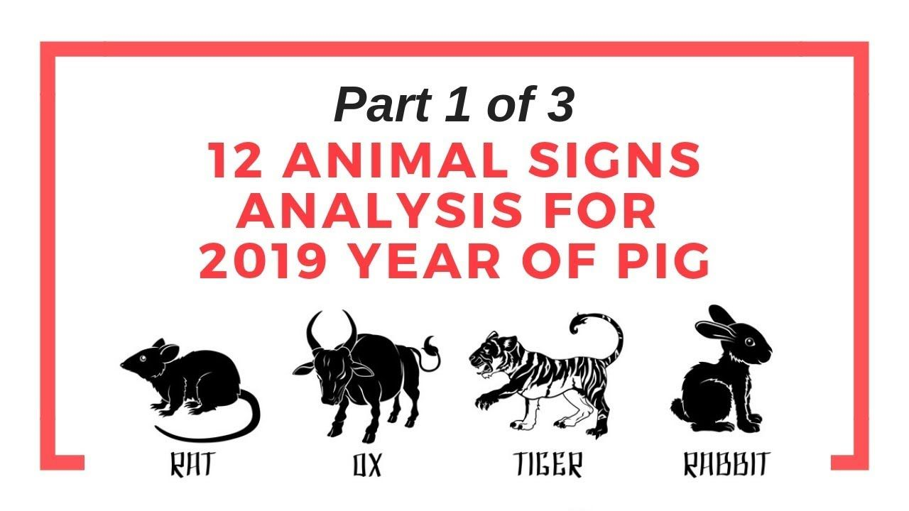 2019 pig year Chinese animal sign prediction part 1 of 3
