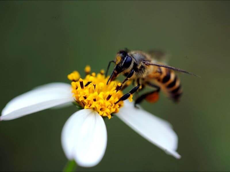 Five natural homemade bee repellents bee repellent bee
