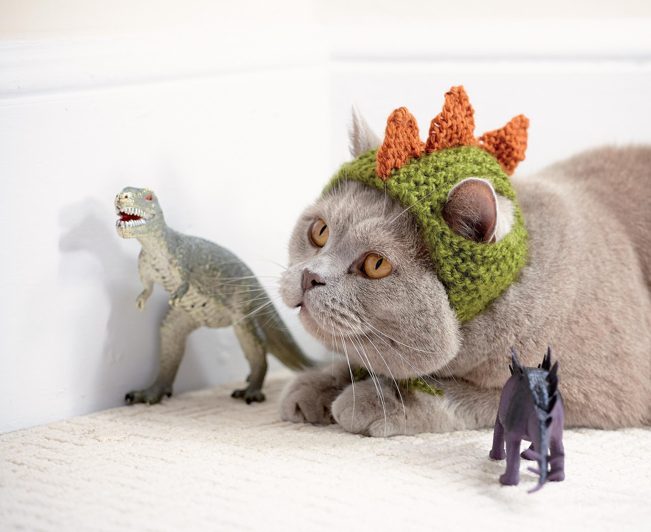 Cats in Hats: Dinosaur ~ sooo wrong but LOL | free pattern ...