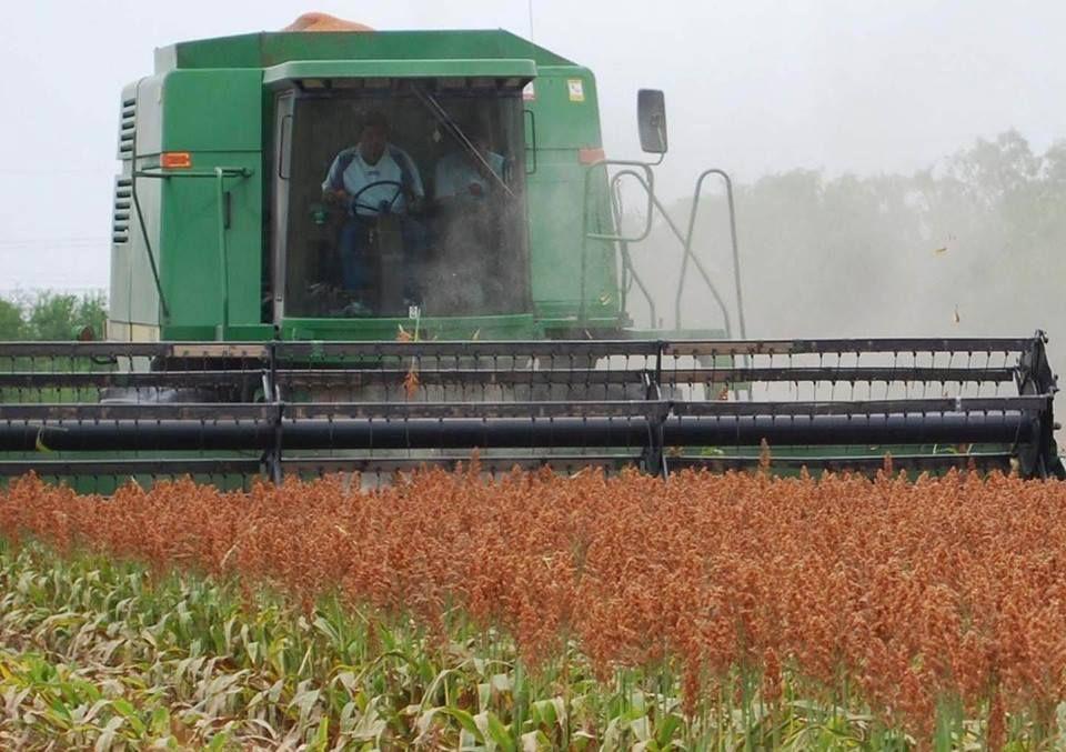 Ganadería y Agricultura