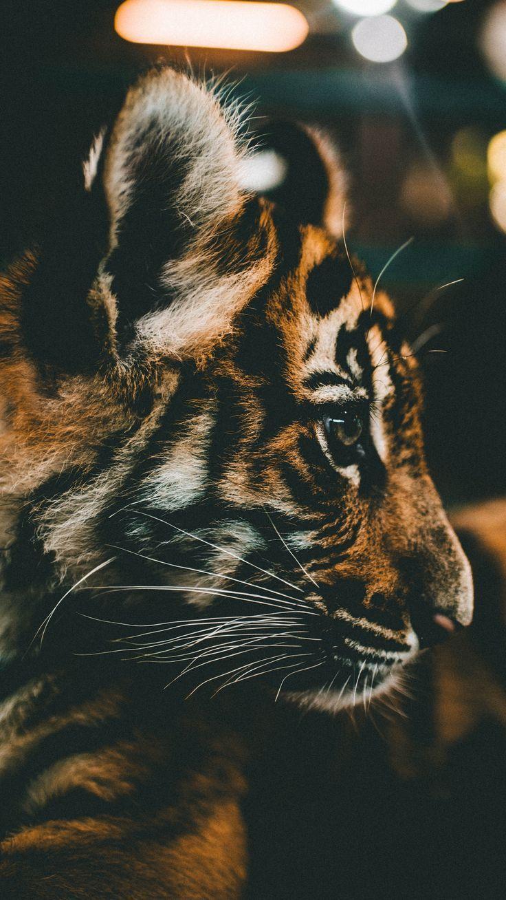 Epingle Par Solidchibi Sur Animaux En 2020 Bebe Tigre Animaux Photos Animaux Sauvages