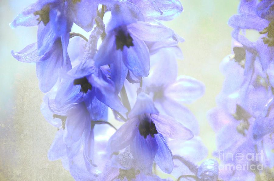 fragile and blue....