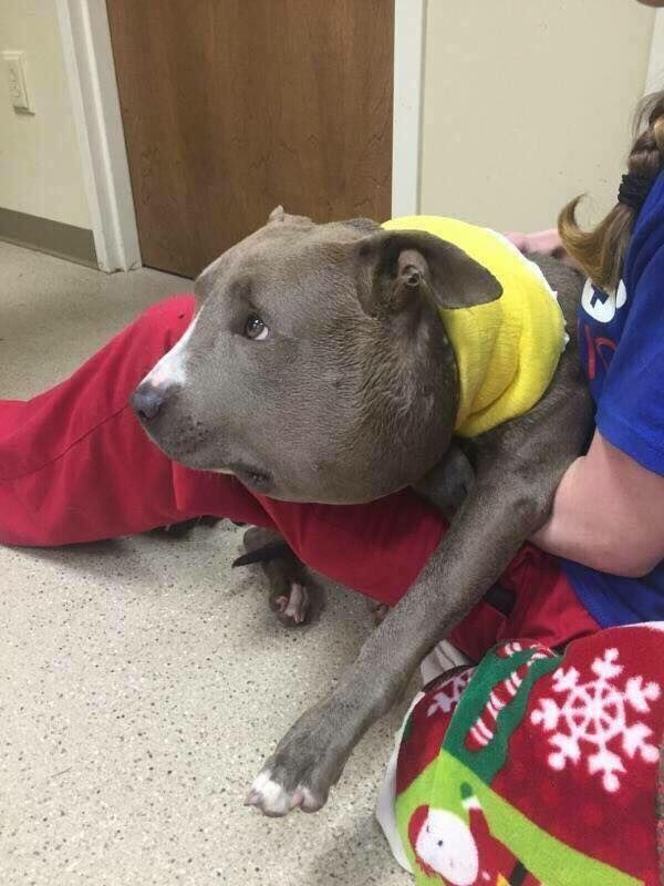 Pin On Dog And Cat Rescue Stories
