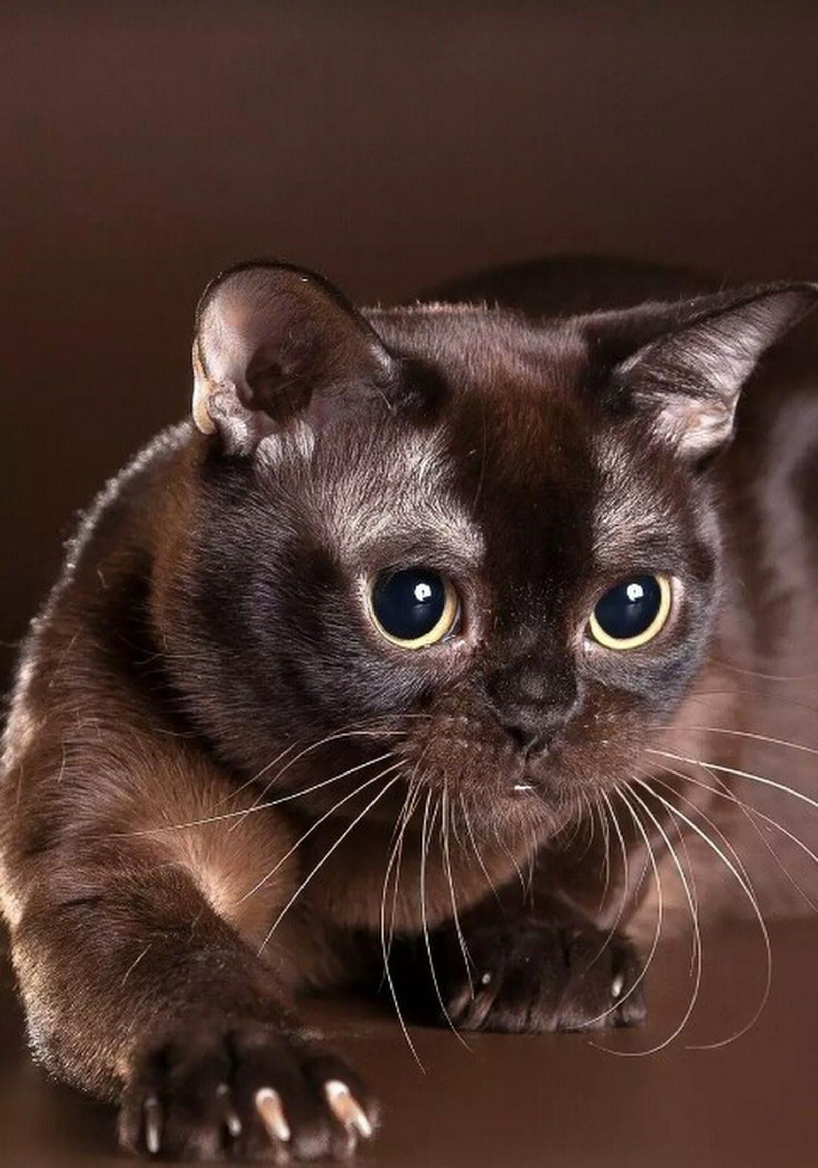 dating hullu kissa nainen Kenmore Jääkaappi jään Maker kytkennät
