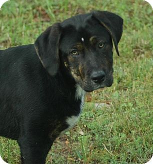 Owings Mills Md Labrador Retriever Mix Meet Desi A Dog For