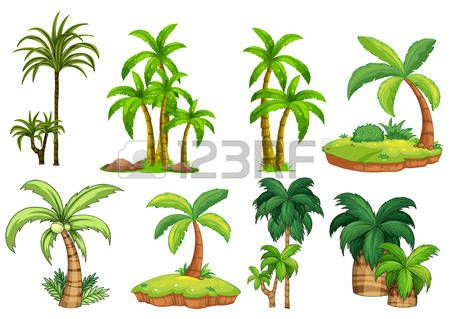 Illustration of different kind of palm trees Stock Vector