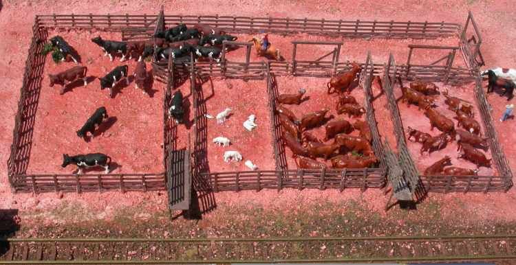 corral for 200 head of cows - Google Search