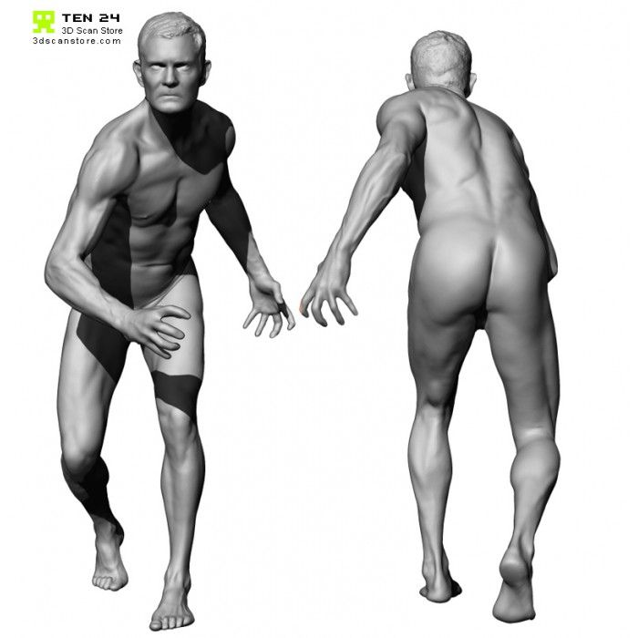 Colour Male 04 Anatomy Bundle Anatomy Anatomy Reference Anatomy Poses