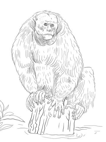 White Handed Gibbon Drawing And Coloring Page Animal Drawings