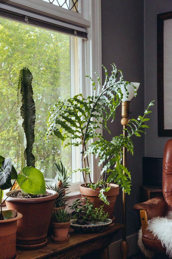 Ein Beisteltisch Vor Dem Fenster Stellen ZimmerpflanzenDekorierenDekorationRaumgestaltungTischBalkonWohnzimmerWohnenGemtliche Couch
