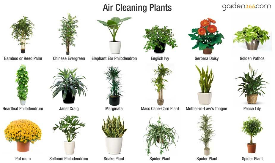 Some Plants Are More Effective At Pulling Certain Chemicals Out Of Indoor Air Than Others Description From Garden365 I Searched For This On Bing
