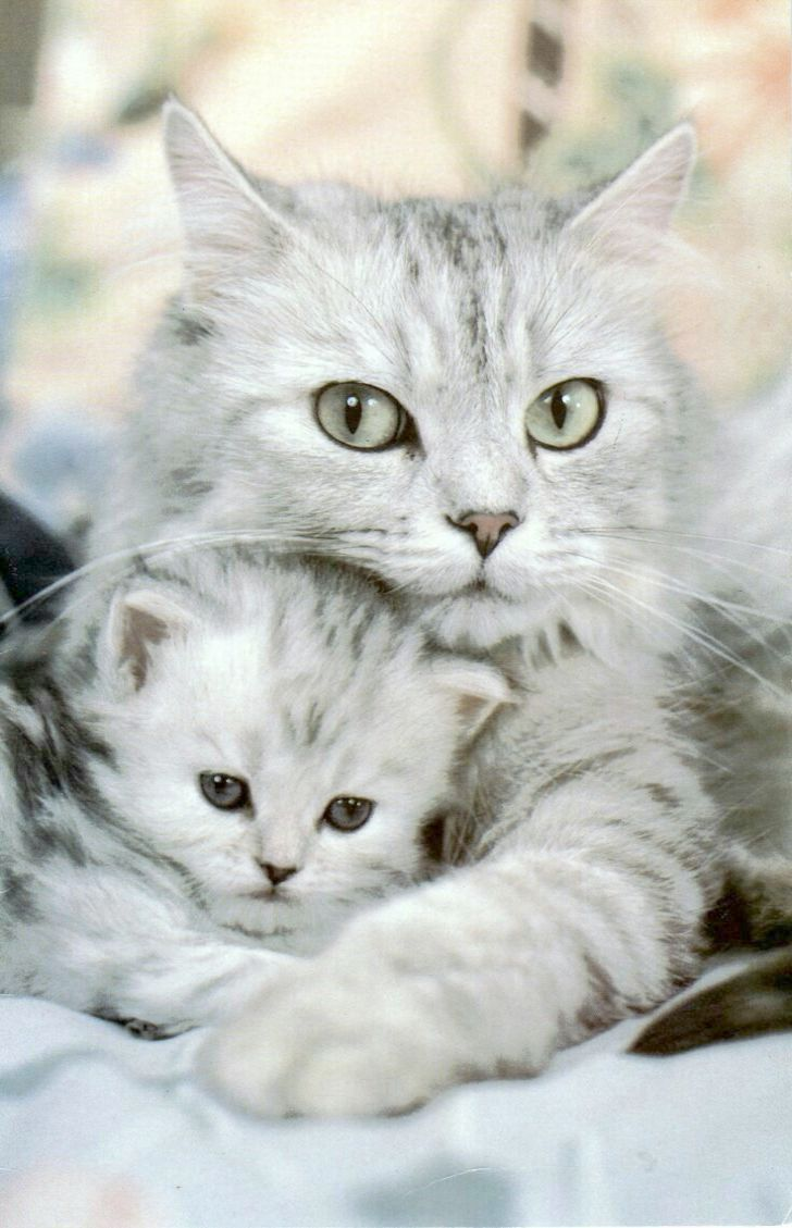 Cats And Kittens On Gumtree Lps Cats And Kittens Ebay Animales Depredadores Animales Adorables