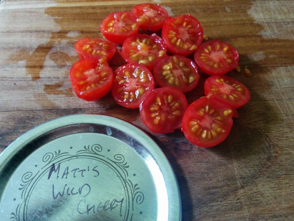 How to save tomato seeds and other wetprocessed seeds