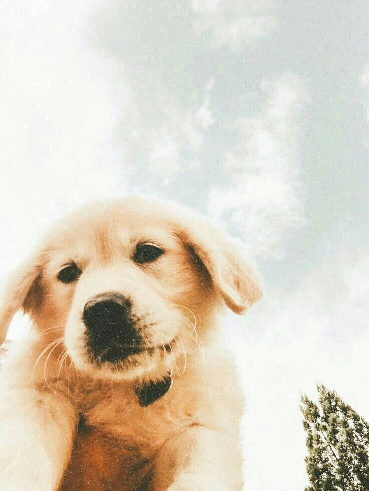 Pin By Stephanie Larosa On Puppy Ideas In 2020 Cute Dogs And Puppies Cute Animals Funny Animals