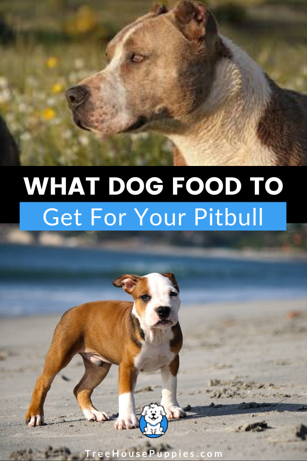 What Dog Food To Get For A Pitbull In 2020 What Dogs Dogs Pitbulls