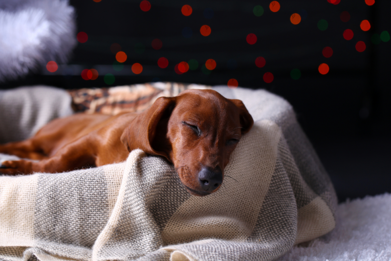 How To Prepare Your Home For Guests This Christmas Puppy Safe Sleeping Dogs Animals