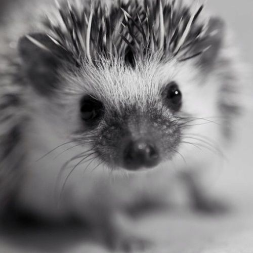 baby animal | Tumblr