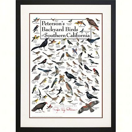 Petersonu0027s Birds Of Southern California Poster
