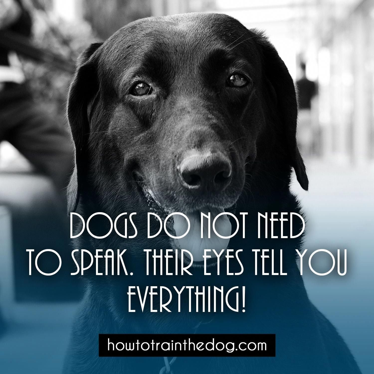 Dogs do not need to speak their eyes tell you everything