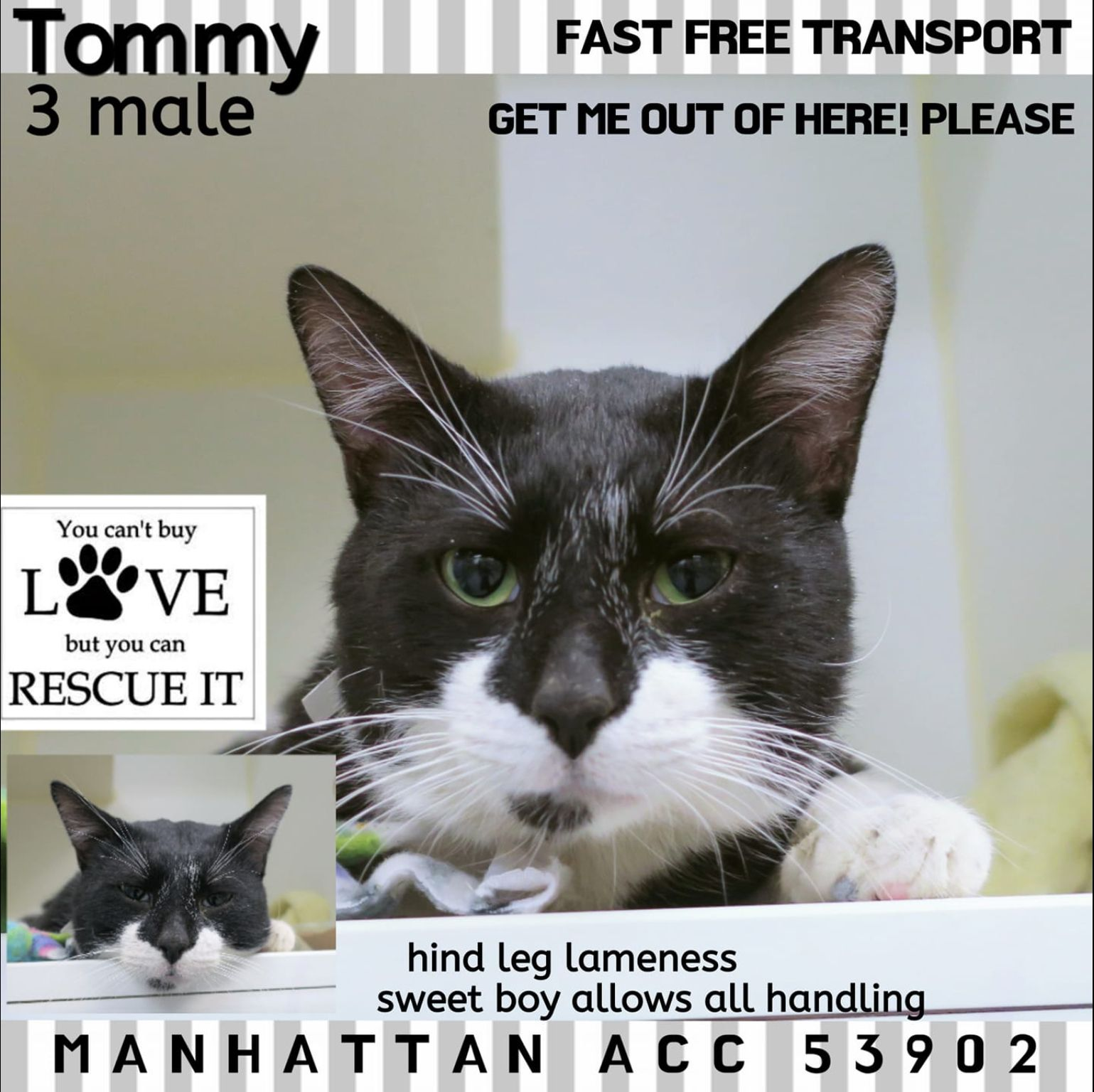 Tommy Pulled By Anjellicle02 07 19 To Die 02 07 19 Cats Cat Today Animal Rescue
