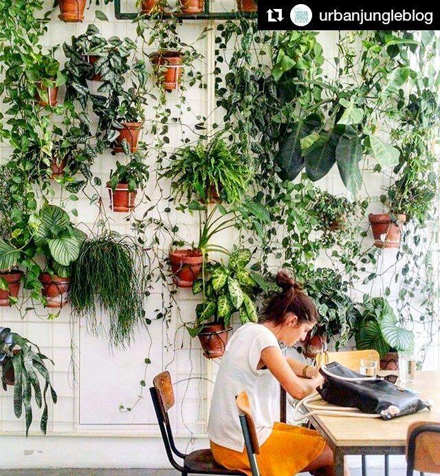 #Cantinhos pequenos e cheios de #plantas ? Sim! Podemos!  #Repost @urbanjungleblog with @repostapp :@tantraeluciphoto #urbanjunglebloggers