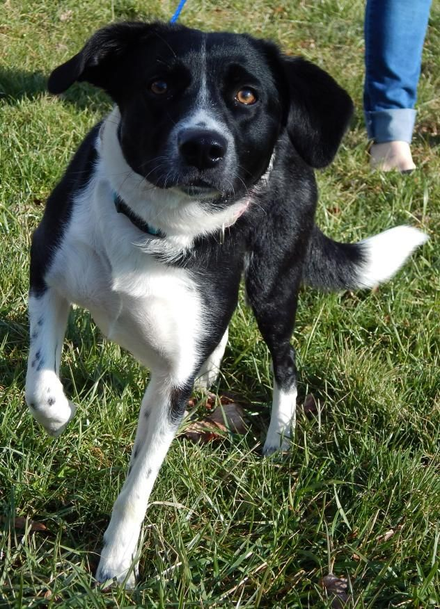 Adopt Oona B 35 Lb Truly Awesome Dog Great Family Pet On Petfinder Family Pet Best Dogs Dogs