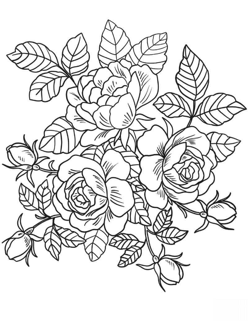 Desenho de Rosas para Colorir: 20 Imagens para Imprimir