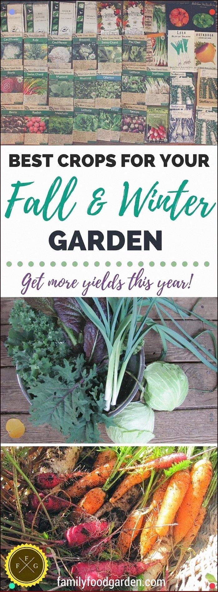 So planen und pflanzen Sie Ihren Herbst- und Wintergarten – So planen und pflanzen Sie …   – winter garden