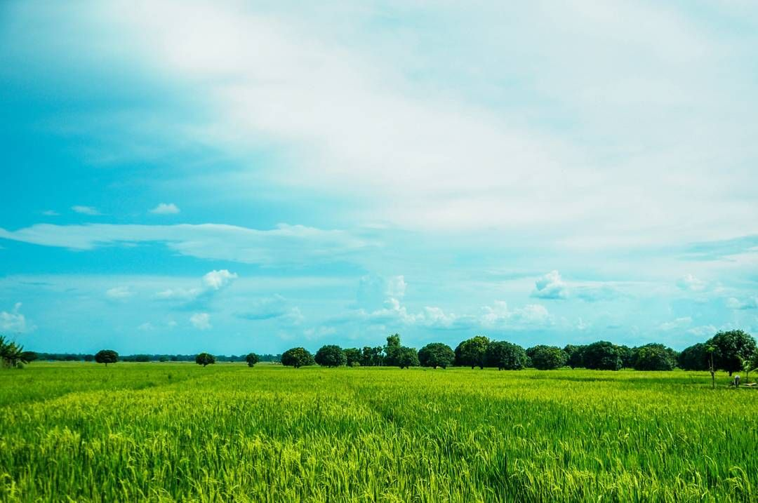 Plains wherever you go! The central section of Luzon is characterized by a flat terrain known as the Central Luzon Plain and it produces most of the country's rice supply. by passportout.asia