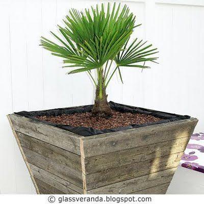 Glassveranda: Gjør-det-selv/DIY: Råtøffe plantekasser i størrelse XXXL til uteplassen, isolert for palmer.