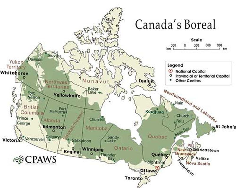Forest Ontario Canada Map The Boreal Forest Stretches From Coast To Coast Across Canada And