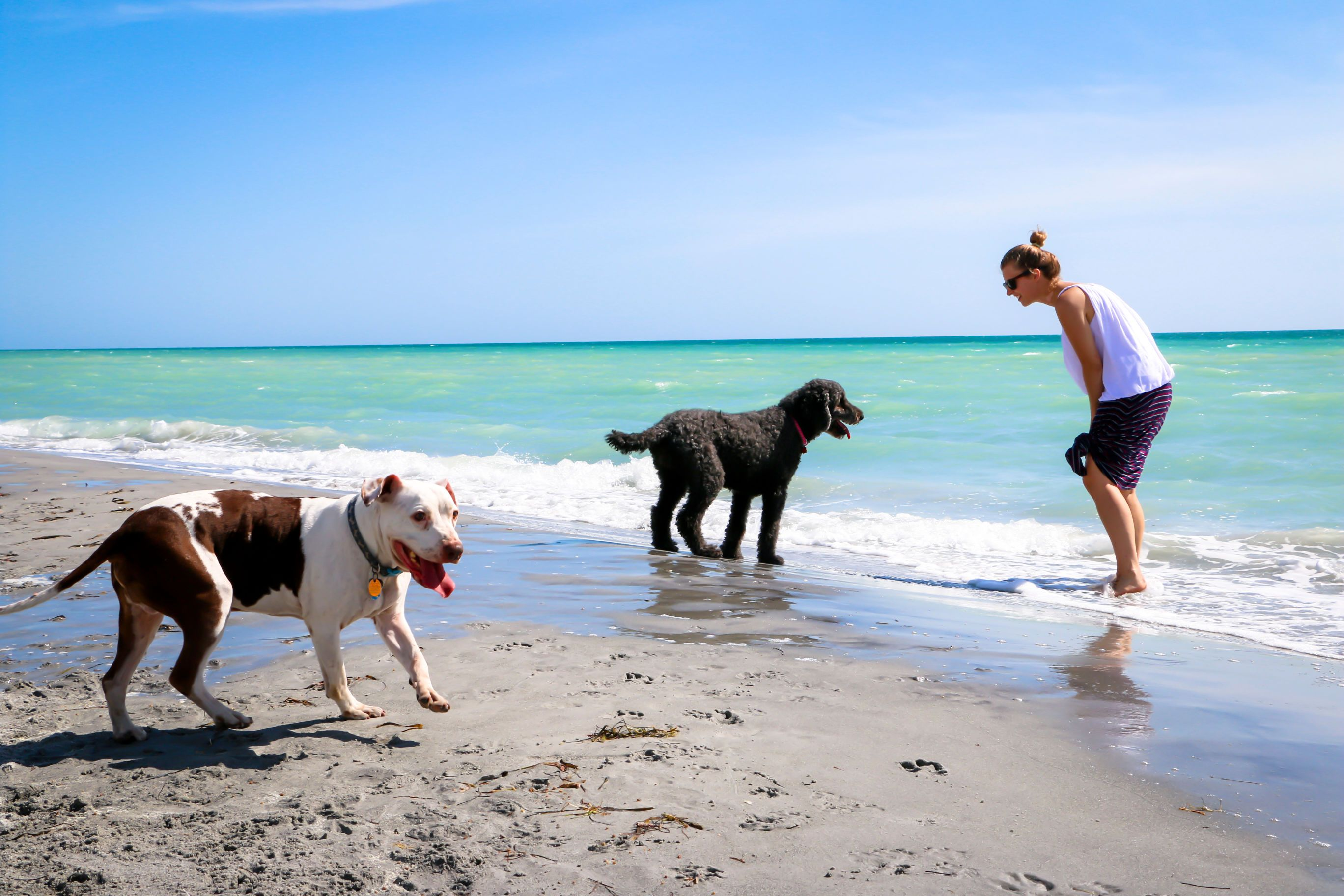 Pet Friendly Beaches In Florida
