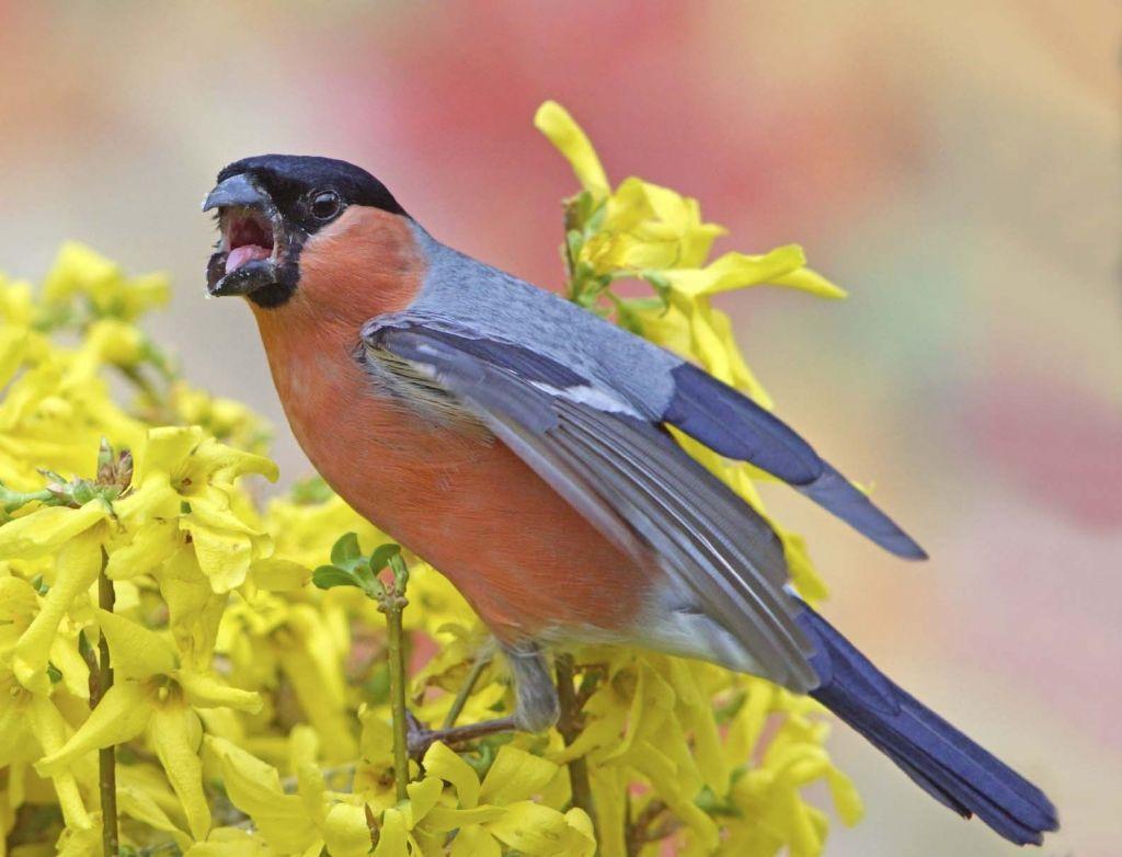 Descubre porqué los #pájaros cantan más en #primavera