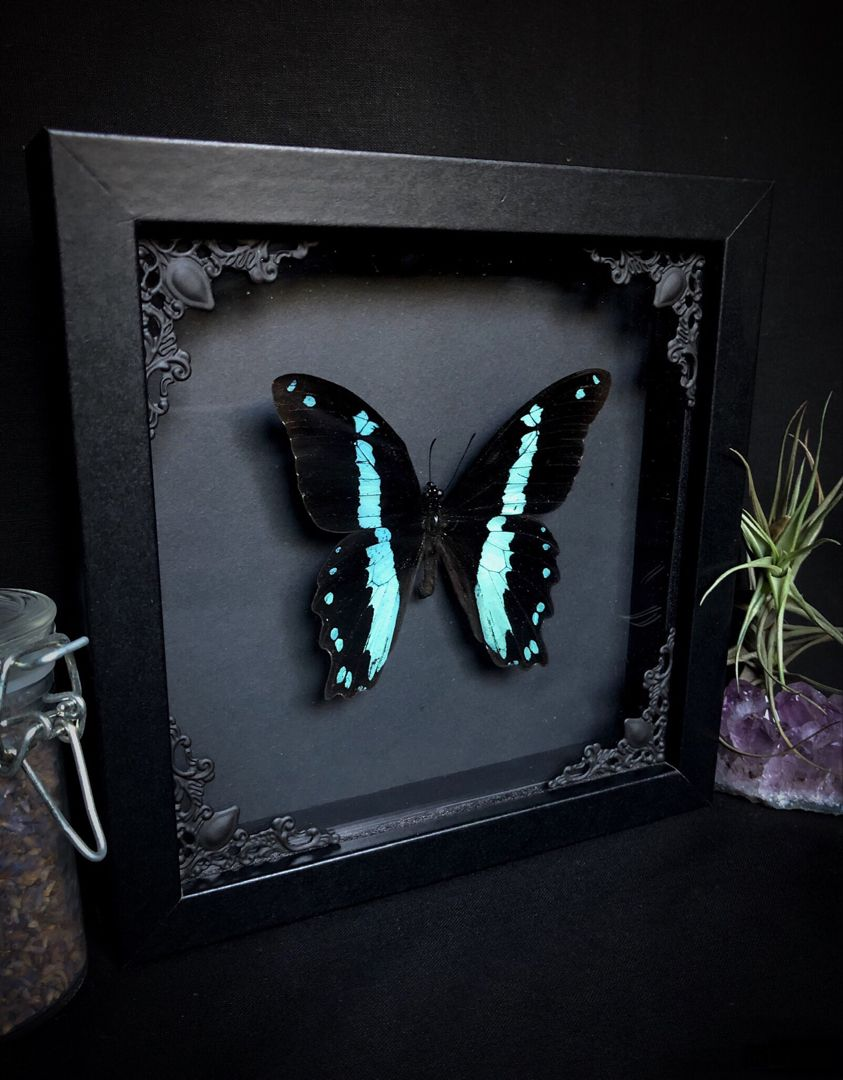 Taxidermy Butterfly by Oddity Asylum. Gothic ornate
