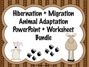 hibernation migration powerpoint lessons worksheets bundle powerpoint lesson worksheets. Black Bedroom Furniture Sets. Home Design Ideas