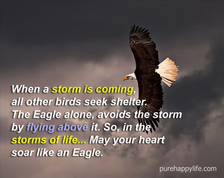 Life Quote When A Storm Is Coming All Other Birds Seek Shelter Storm Quotes Life Quotes Eagles Quotes