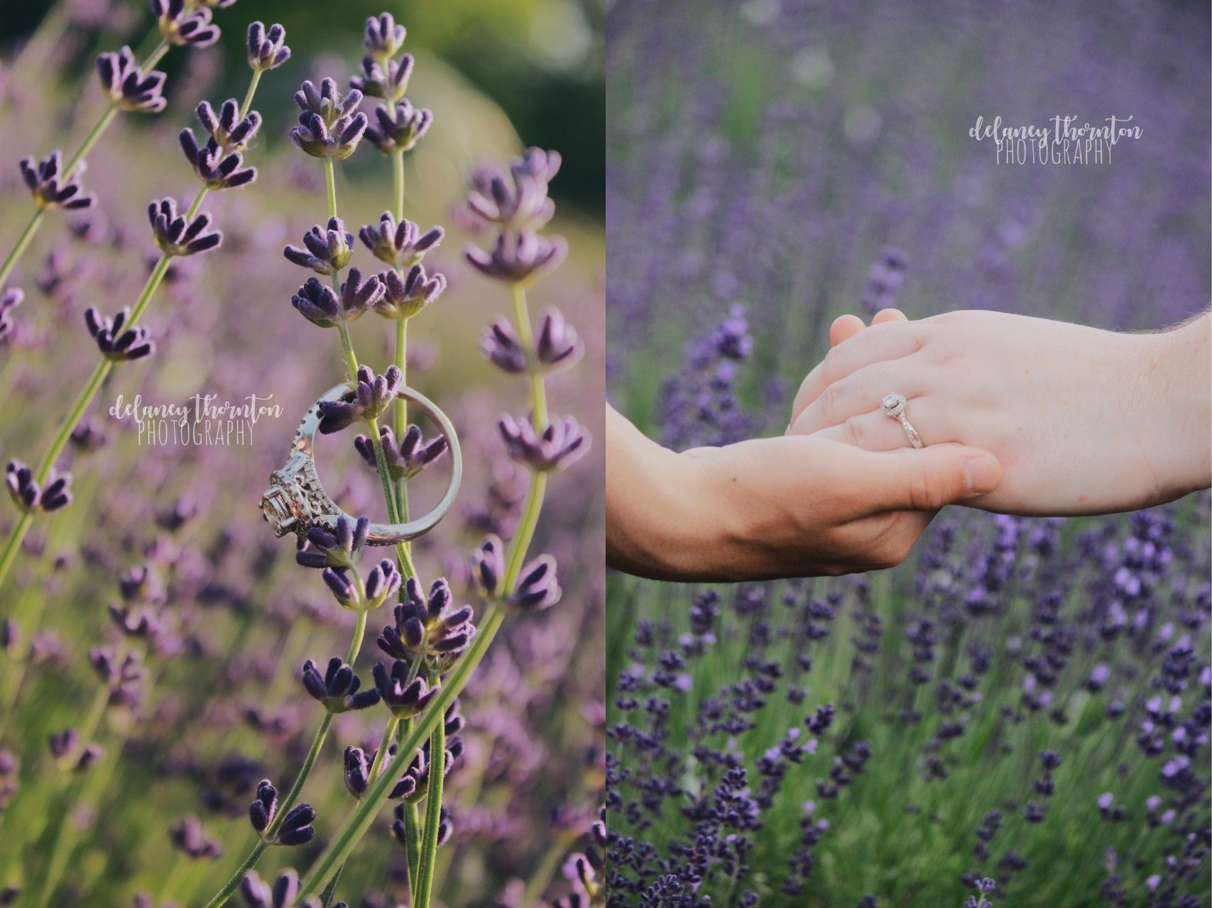 www.throughdelaneyslens.com Beautiful summer engagement photo session in a lavender field - they're full bloom in June! By Delaney Thornton Photography
