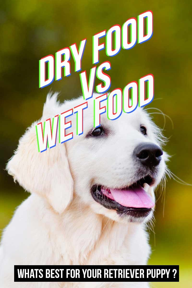 Best food for golden retriever puppy dogs top tips and