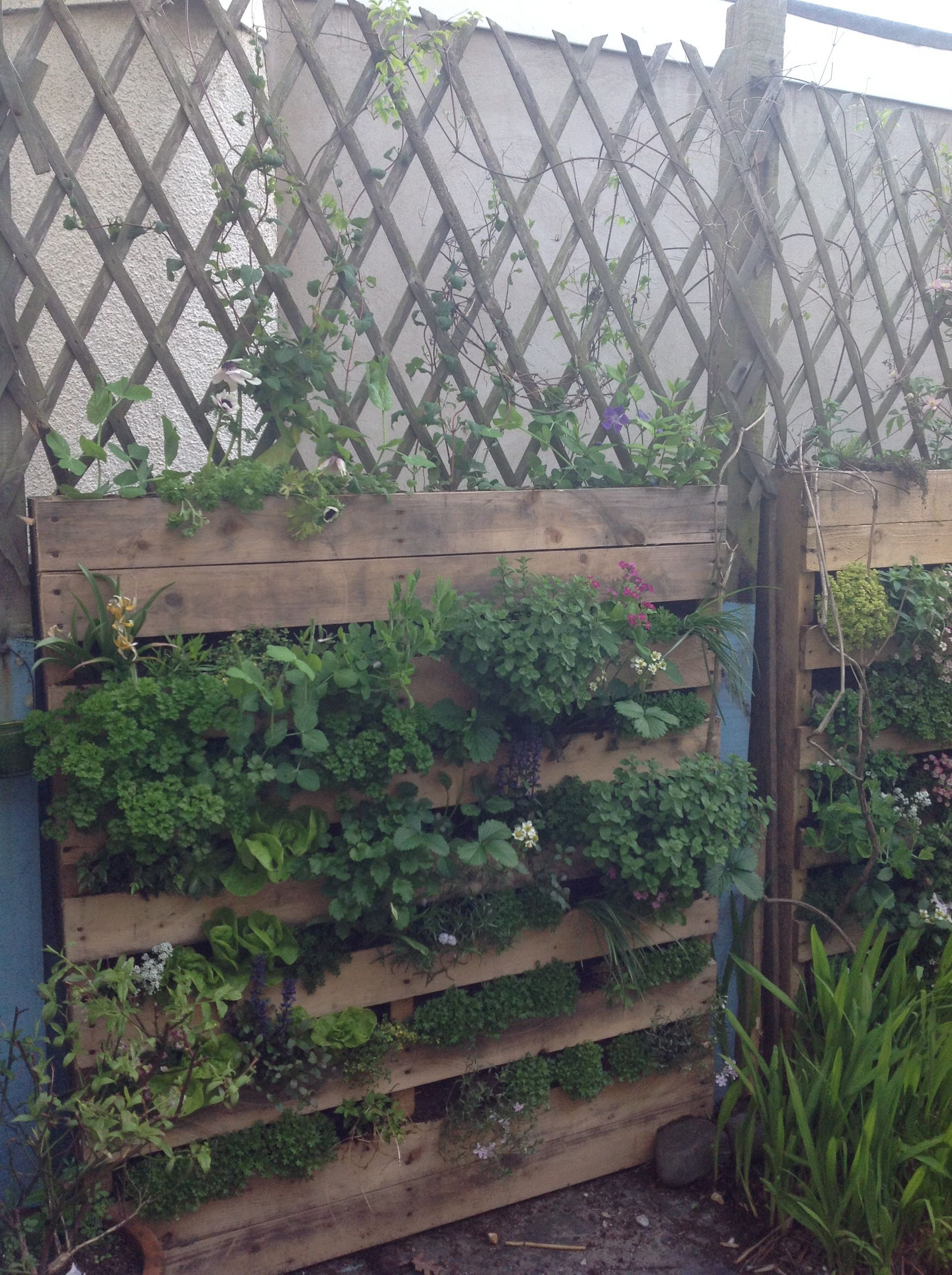 My living wall all completed | Living wall, Outdoor ... on My Garden Outdoor Living id=55283