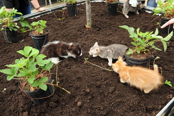 Cat Playgrounds Are Now a Thing at Least at the Toronto Humane