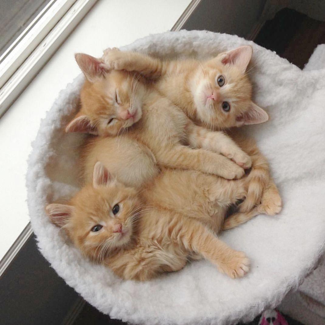 Kittens Fighting Kittens Sleeping Kittens Cutest Cute Cats And Kittens Cute Cats