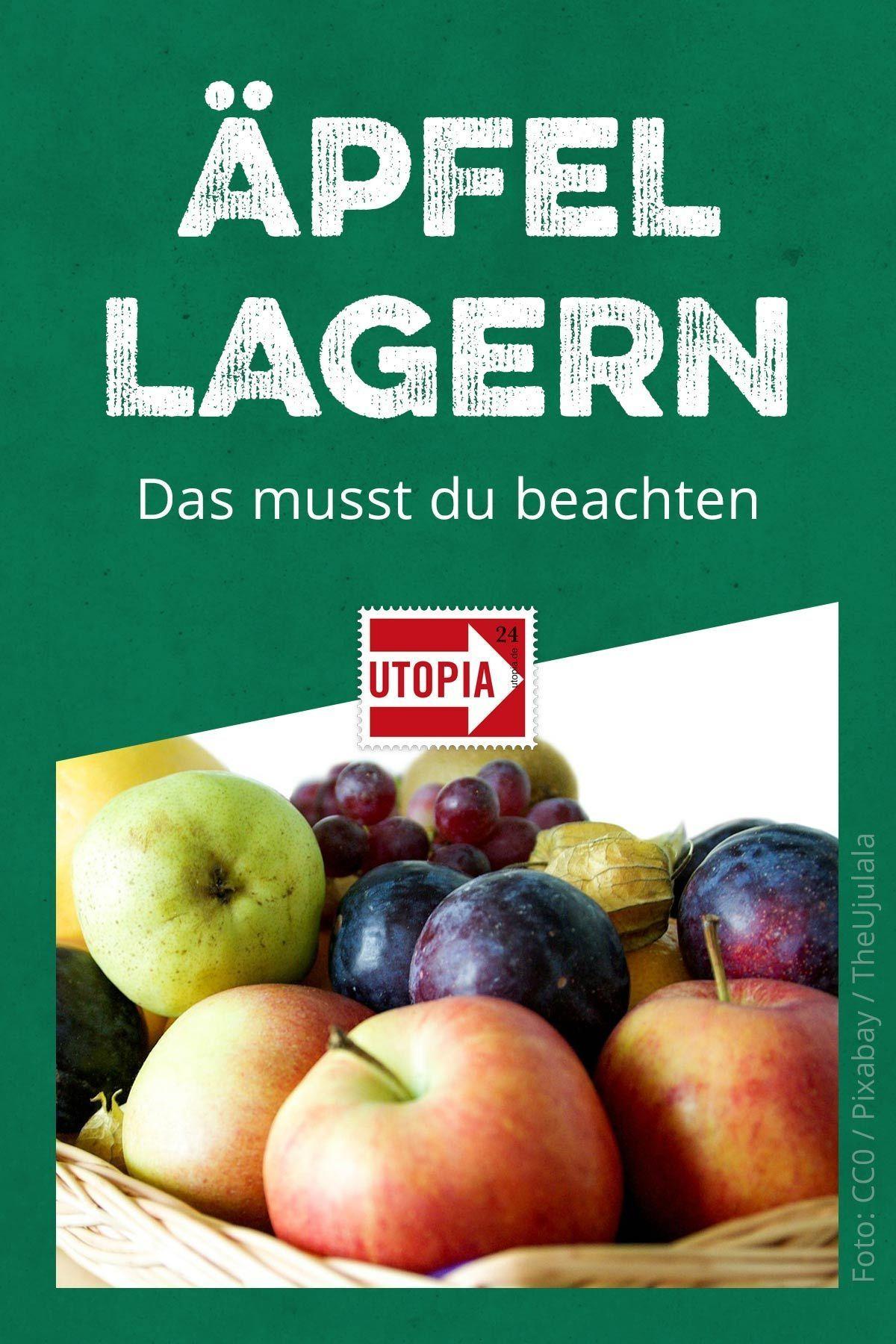 Äpfel richtig lagern: so bleiben sie länger frisch und schmackhaft #Äpfelverwerten Äpfel haltbar machen und richtig lagern: Um Lebensmittelverschwendung zu vermeiden, Geld zu sparen und einfach länger Freude an der gesunden Frucht zu haben, solltest du also ein paar Tipps zur Lagerung beachten. Utopia erklärt dir, wie Äpfel länger frisch und schmackhaft bleiben. #ÄpfelLagern #Äpfelverwerten