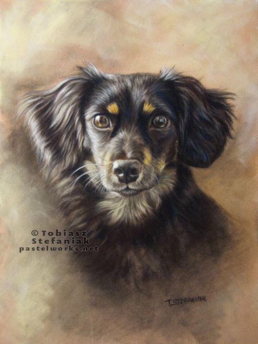 Tobiasz Stefaniak Black Dog Portrait Dog Portraits